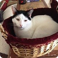 Adopt A Pet :: Mr Blue Eyes - Orange, CA