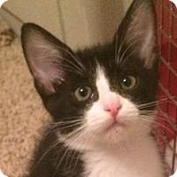 Adopt A Pet :: Hera - Mesa, AZ
