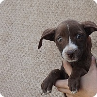 Adopt A Pet :: Kelsi - Oviedo, FL