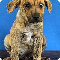 Adopt A Pet :: Alex - Waldorf, MD