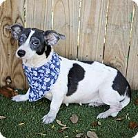 Adopt A Pet :: Sweetie - Lakeland, FL