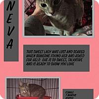 Adopt A Pet :: Neva - CLEVELAND, OH