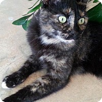 Adopt A Pet :: Maya 5 yrs old -COURTESY LISTING - Orlando, FL