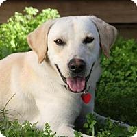Adopt A Pet :: Logan - Clovis, CA
