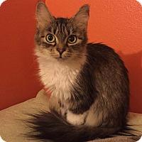 Adopt A Pet :: Kindy - Colorado Springs, CO