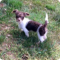 Adopt A Pet :: Lacey - Winder, GA