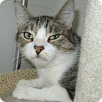 Adopt A Pet :: Cheri - Alamo, CA