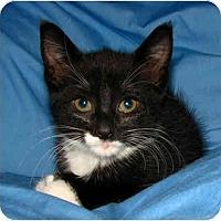 Adopt A Pet :: Bonnie - Oxford, NY