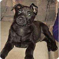 Adopt A Pet :: Zack - San Diego, CA