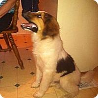 Adopt A Pet :: Barry - Albany, NY