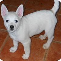 Adopt A Pet :: Baxter - dewey, AZ