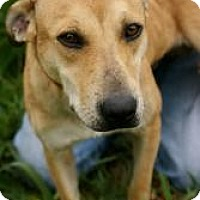 Adopt A Pet :: Huxley - Conway, AR