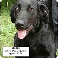 Adopt A Pet :: I.D. # 700-08 - ADOPTED! - Zanesville, OH