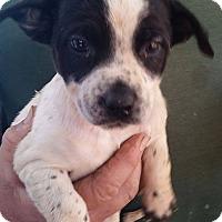 Adopt A Pet :: Vera Violet Vinn - Gainesville, FL