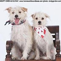 Adopt A Pet :: Owen - McKinney, TX