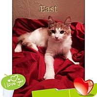Adopt A Pet :: East - Harrisburg, NC