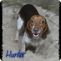 Adopt A Pet :: Hunter - Crandall, GA