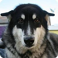 Adopt A Pet :: Kodiak - San Francisco, CA