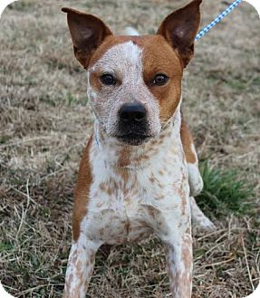 Dog Adoption Manhattan Kansas