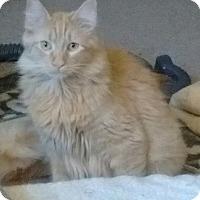 Adopt A Pet :: Sergio - Springdale, AR
