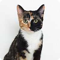 Adopt A Pet :: Daisy - Stockton, CA