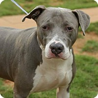 Adopt A Pet :: Chance - Newnan, GA