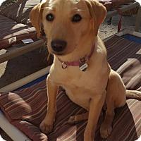 Adopt A Pet :: Xp litter - Cassidy - ADOPTED - Livonia, MI