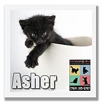 Adopt A Pet :: Asher - Palm Desert, CA