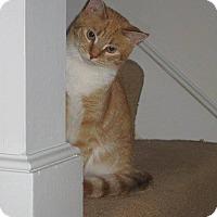 Adopt A Pet :: Shelby & Callie - Salem, NH