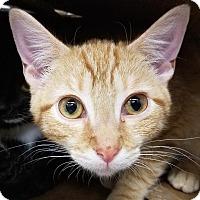Adopt A Pet :: Steve Sanders - New York, NY