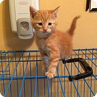 Adopt A Pet :: Finn - Woodward, OK