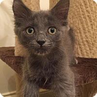 Adopt A Pet :: Vicki - Tampa, FL