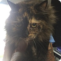 Adopt A Pet :: Onix - Philadelphia, PA