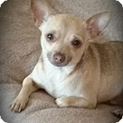 Adopt A Pet :: Pepito - Foster needed