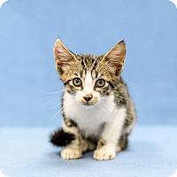 Adopt A Pet :: Datsun - Lake Jackson, TX