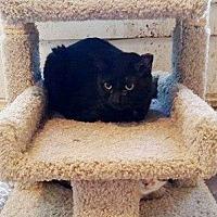 Adopt A Pet :: 21 - Putnam, CT