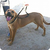 Terrier (Unknown Type, Medium) Mix Dog for adoption in California City, California - Dina
