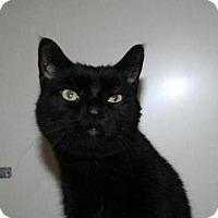 Adopt A Pet :: Andy - Lancaster, PA