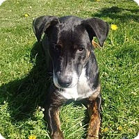 Foxhound Mix Dog for adoption in Tomah, Wisconsin - FIona