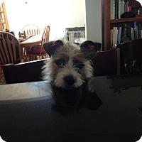 Adopt A Pet :: Jasmine - Ogden, UT