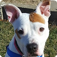 Adopt A Pet :: Xena - Bloomington, IL