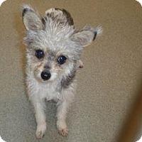 Adopt A Pet :: Jack - Wildomar, CA