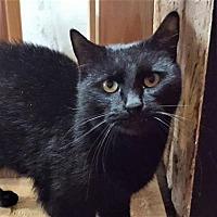 Adopt A Pet :: Nathan - Encinitas, CA