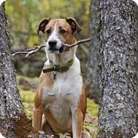 Adopt A Pet :: Mateo - Saskatoon, SK