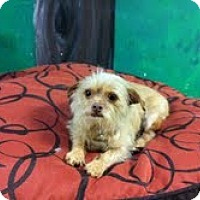 Adopt A Pet :: spanky - Goleta, CA