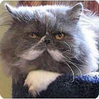 Adopt A Pet :: Balou - Davis, CA