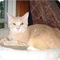 Adopt A Pet :: Timothy - Portland, ME
