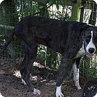 Adopt A Pet :: Gideon - Jupiter, FL