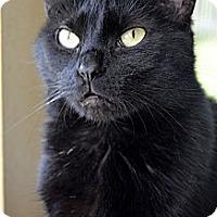 Adopt A Pet :: Ebony - Xenia, OH