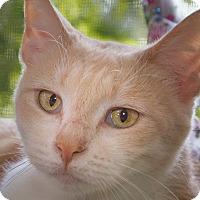 Adopt A Pet :: Buttermilk - Poway, CA